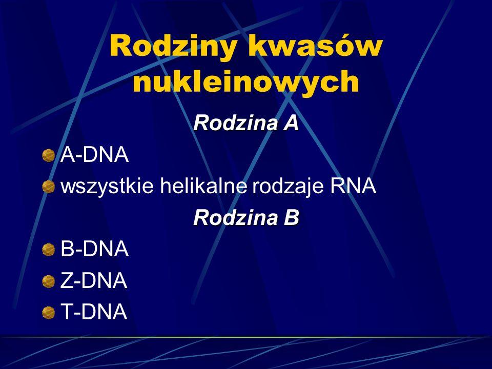 Rodziny kwasów nukleinowych Rodzina A A-DNA wszystkie helikalne rodzaje RNA Rodzina B B-DNA Z-DNA T-DNA