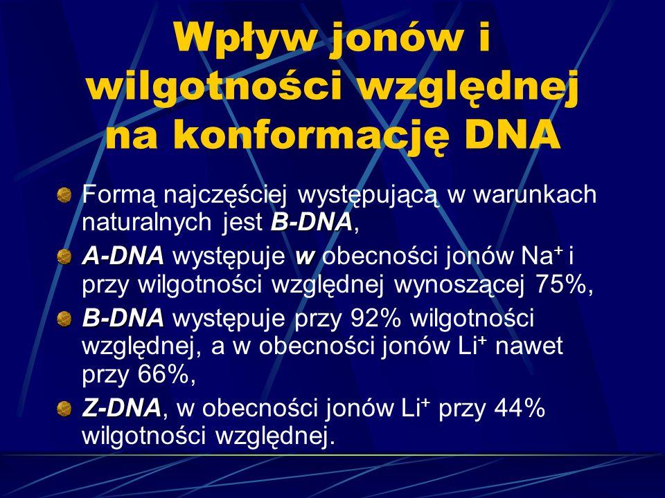 Wpływ jonów i wilgotności względnej na konformację DNA B-DNA Formą najczęściej występującą w warunkach naturalnych jest B-DNA, A-DNA w A-DNA występuje