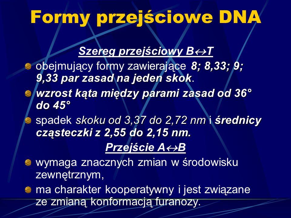 Formy przejściowe DNA Szereg przejściowy B T 8; 8,33; 9; 9,33 par zasad na jeden skok obejmujący formy zawierające 8; 8,33; 9; 9,33 par zasad na jeden
