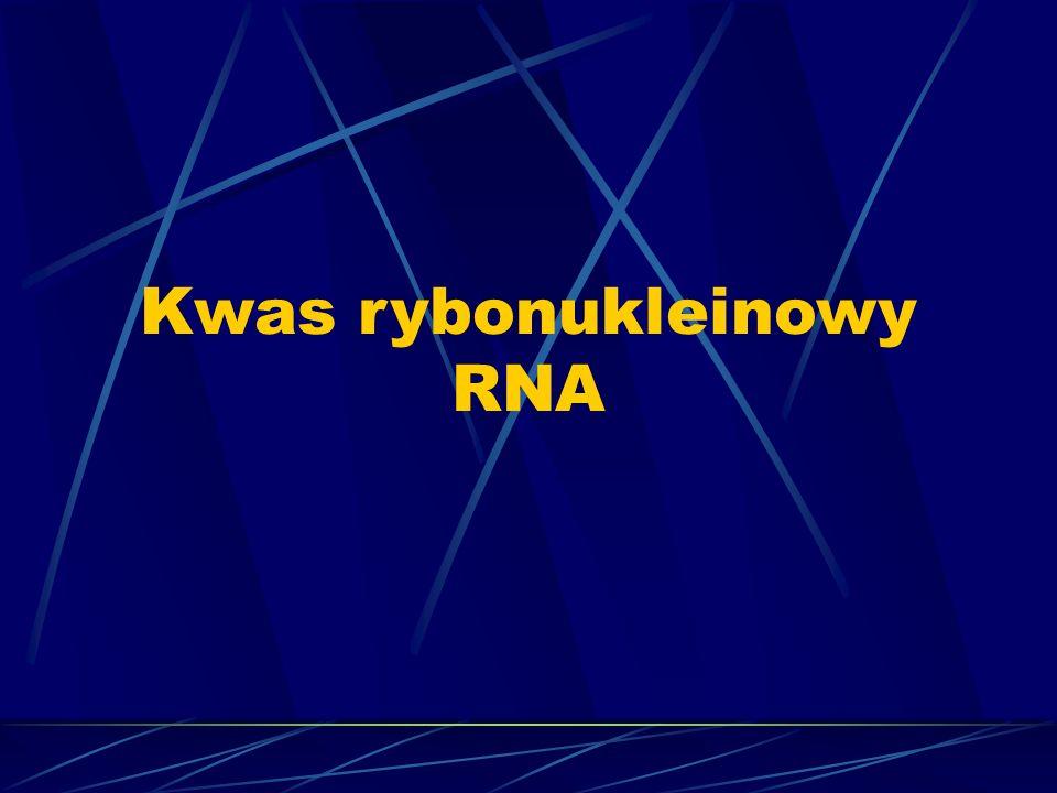 Kwas rybonukleinowy RNA
