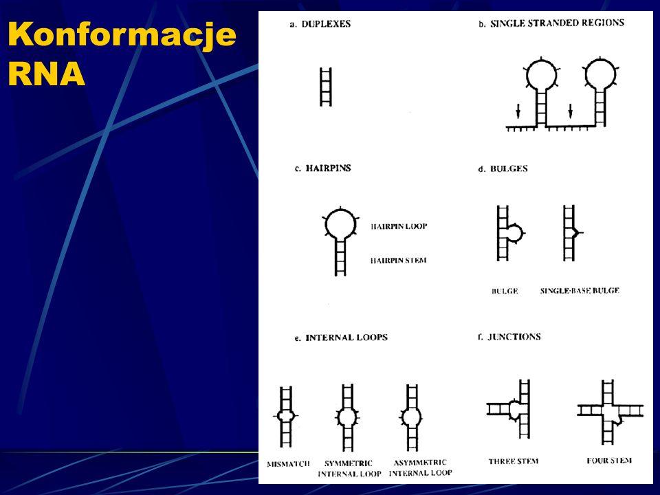 Konformacje RNA