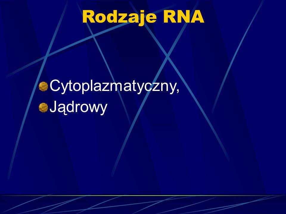 Rodzaje RNA Cytoplazmatyczny, Jądrowy