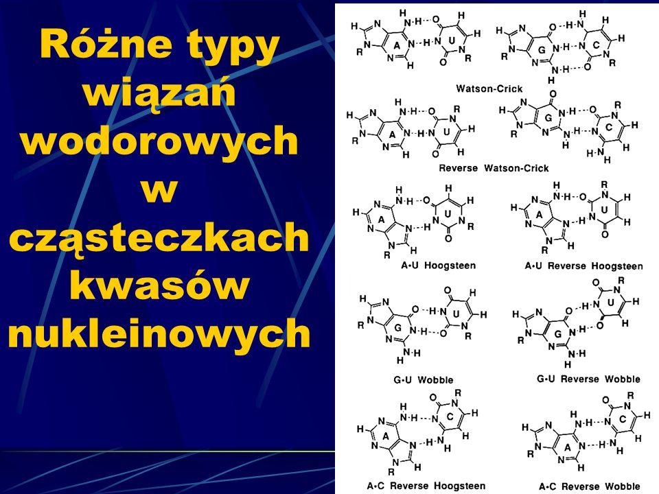 Różne typy wiązań wodorowych w cząsteczkach kwasów nukleinowych