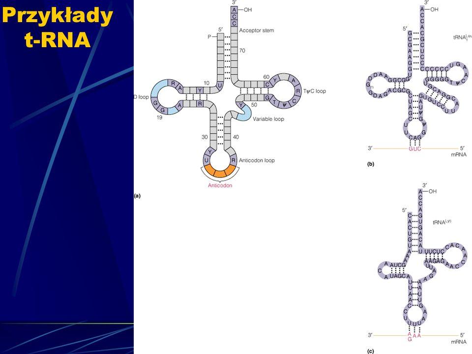 Przykłady t-RNA