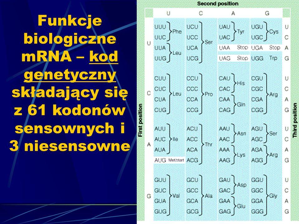 Funkcje biologiczne mRNA – kod genetyczny składający się z 61 kodonów sensownych i 3 niesensowne