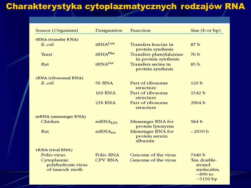 Charakterystyka cytoplazmatycznych rodzajów RNA