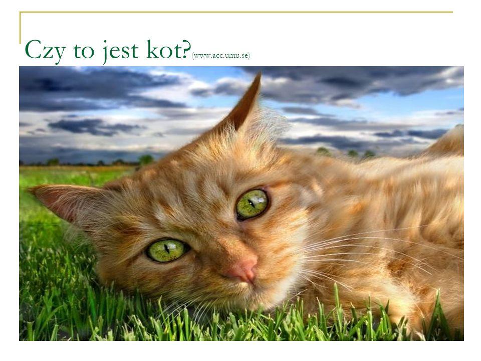 Czy to jest kot? (www.acc.umu.se)