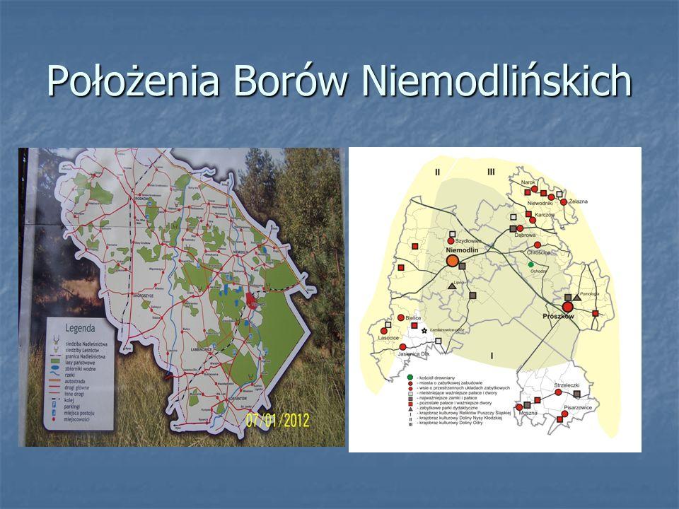 Opis położenia Bory Niemodlińskie zajmują powierzchnię 4541,3 ha.