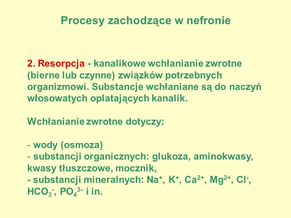 Procesy zachodzące w nefronie 2. Resorpcja - kanalikowe wchłanianie zwrotne (bierne lub czynne) związków potrzebnych organizmowi. Substancje wchłanian