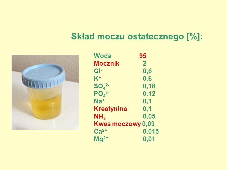 Skład moczu ostatecznego [%]: Woda95 Mocznik 2 Cl - 0,6 K + 0,6 SO 4 2- 0,18 PO 4 3- 0,12 Na + 0,1 Kreatynina 0,1 NH 3 0,05 Kwas moczowy 0,03 Ca 2+ 0,