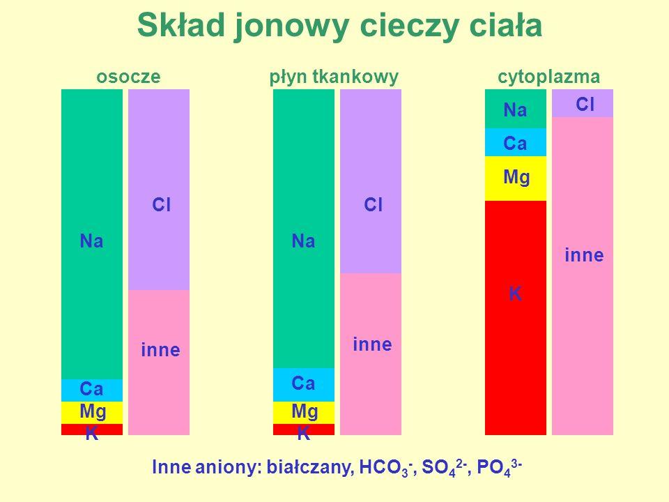 Skład jonowy cieczy ciała osocze Na Ca Mg K Cl inne płyn tkankowy Na Ca Mg K Cl inne cytoplazma Na Ca Mg K Cl inne Inne aniony: białczany, HCO 3 -, SO