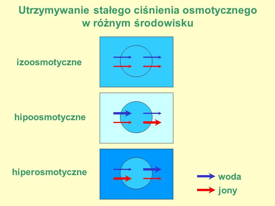 Utrzymywanie stałego ciśnienia osmotycznego w różnym środowisku izoosmotyczne hipoosmotyczne hiperosmotyczne woda jony