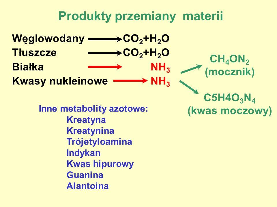 Produkty przemiany materii WęglowodanyCO 2 +H 2 O TłuszczeCO 2 +H 2 O BiałkaNH 3 Kwasy nukleinoweNH 3 CH 4 ON 2 (mocznik) C5H4O 3 N 4 (kwas moczowy) I