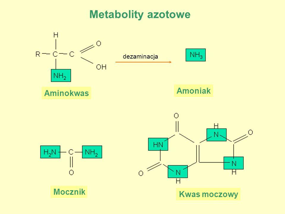 Metabolity azotowe Aminokwas Amoniak dezaminacja Mocznik Kwas moczowy