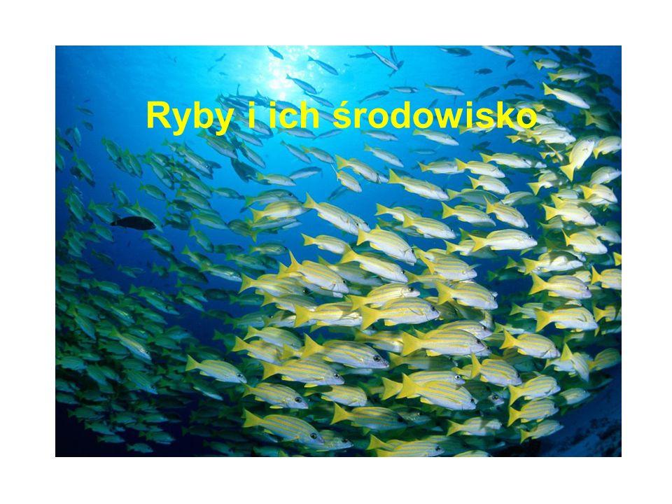 Ryby: 25 000 gatunków 58% - morskie 41% - słodkowodne 1% - dwuśrodowiskowe