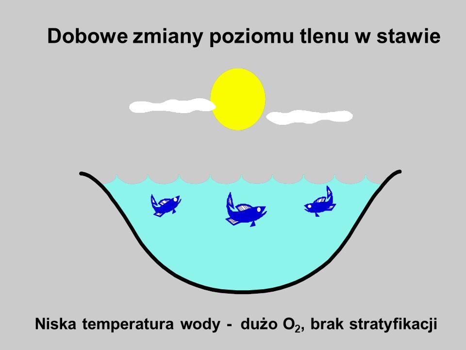 Rozkład materii organicznej Deficyt tlenowy Wysoki poziom O 2 w warstwie powierzchniowej Dobowe zmiany poziomu tlenu w stawie Wysoka temperatura wody - stratyfikacja termiczno-tlenowa