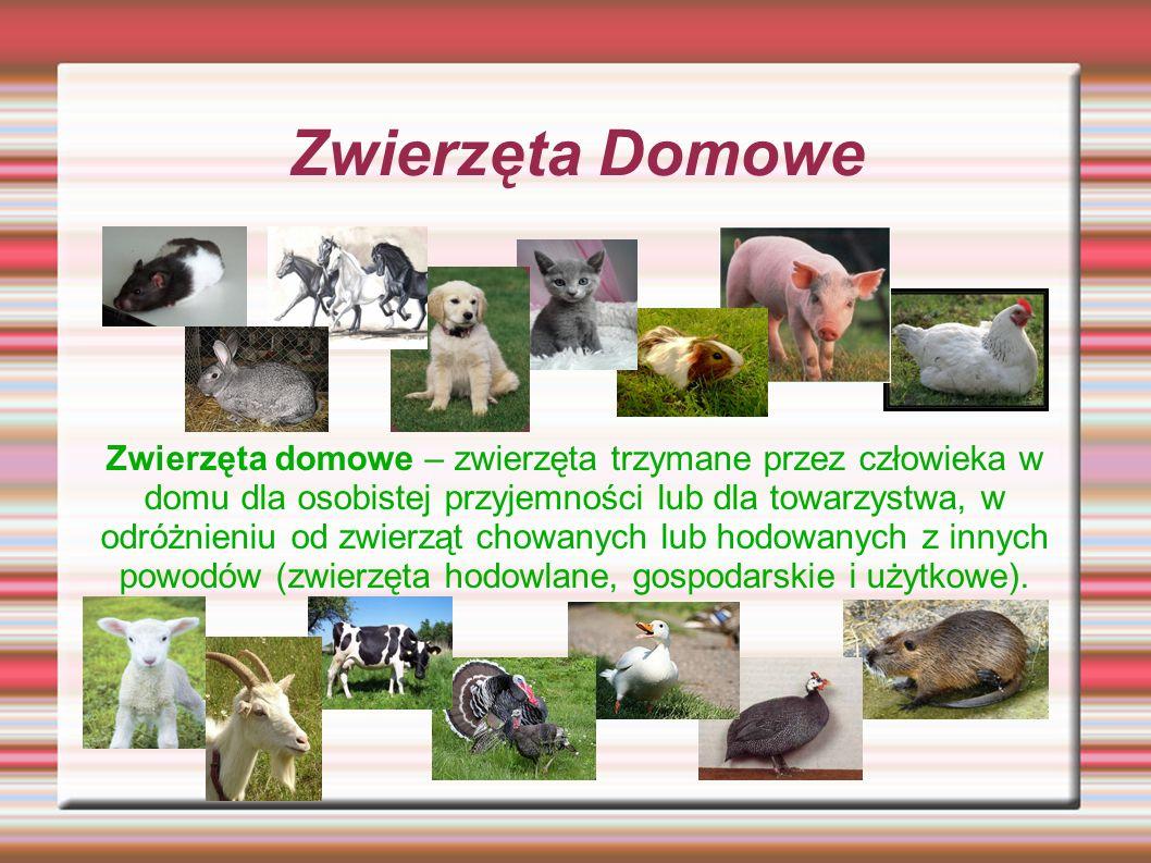 Zwierzęta Domowe Zwierzęta domowe – zwierzęta trzymane przez człowieka w domu dla osobistej przyjemności lub dla towarzystwa, w odróżnieniu od zwierzą