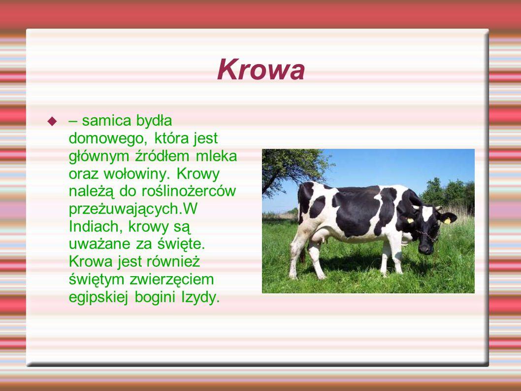 Krowa – samica bydła domowego, która jest głównym źródłem mleka oraz wołowiny. Krowy należą do roślinożerców przeżuwających.W Indiach, krowy są uważan