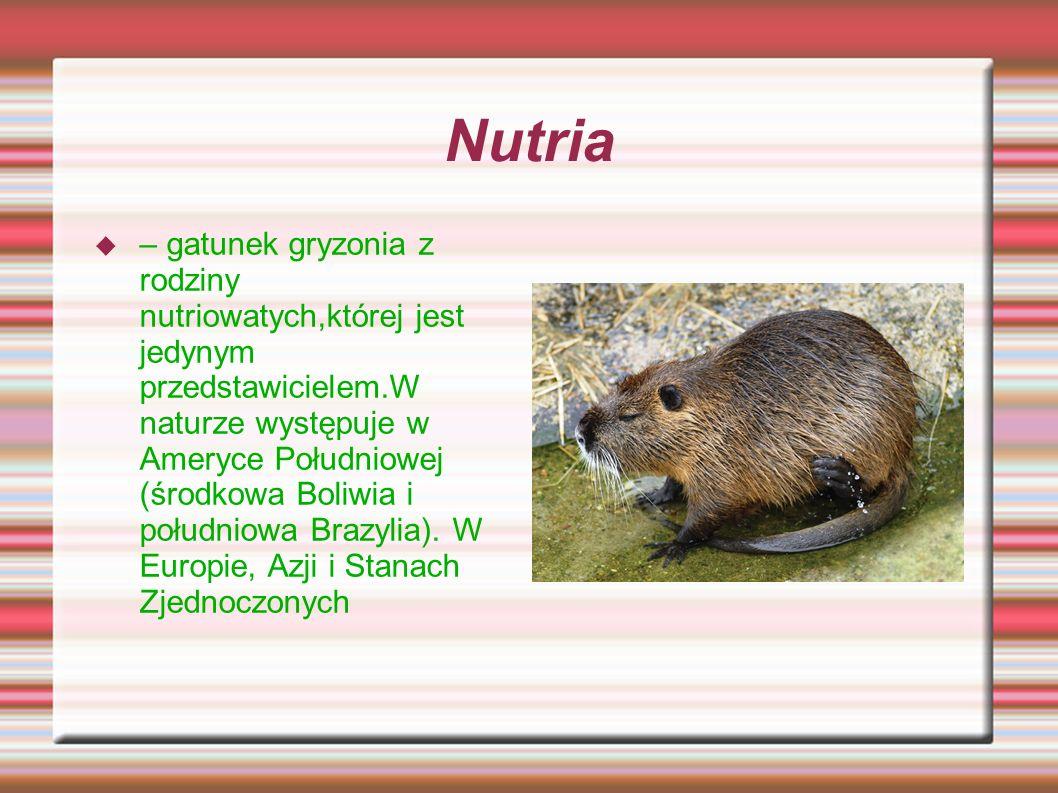 Nutria – gatunek gryzonia z rodziny nutriowatych,której jest jedynym przedstawicielem.W naturze występuje w Ameryce Południowej (środkowa Boliwia i po