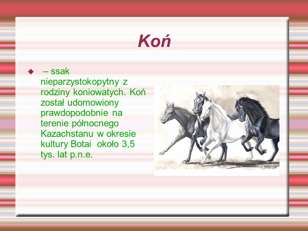 Koń – ssak nieparzystokopytny z rodziny koniowatych. Koń został udomowiony prawdopodobnie na terenie północnego Kazachstanu w okresie kultury Botai ok
