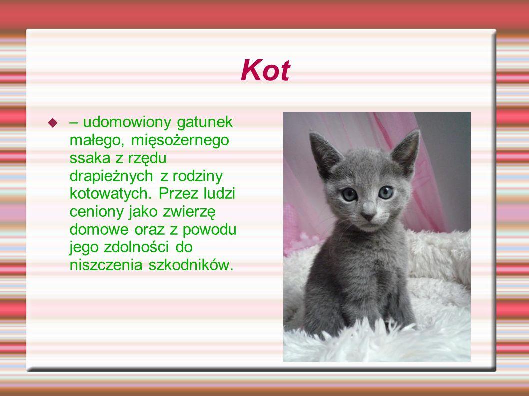 Kot – udomowiony gatunek małego, mięsożernego ssaka z rzędu drapieżnych z rodziny kotowatych. Przez ludzi ceniony jako zwierzę domowe oraz z powodu je