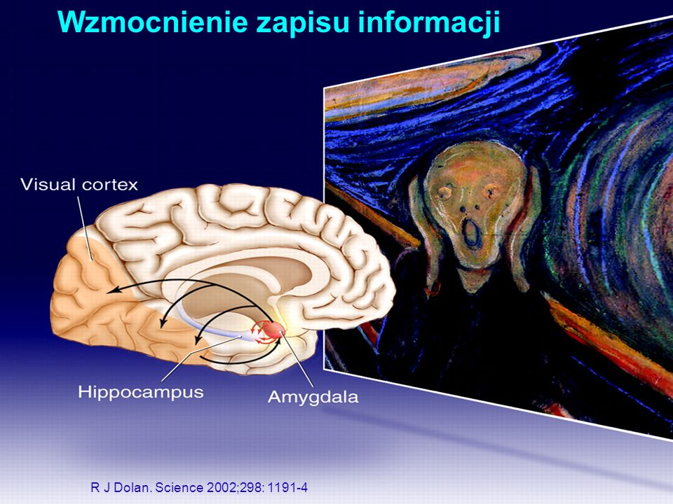 Wzmocnienie zapisu informacji R J Dolan. Science 2002;298: 1191-4