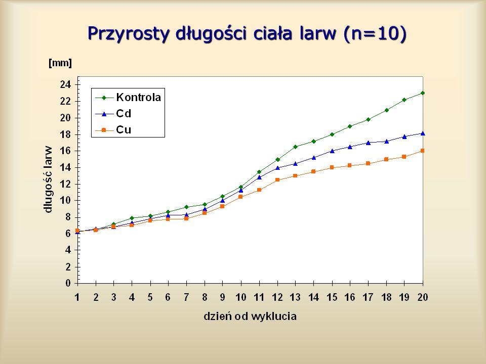 Przyrosty długości ciała larw (n=10)