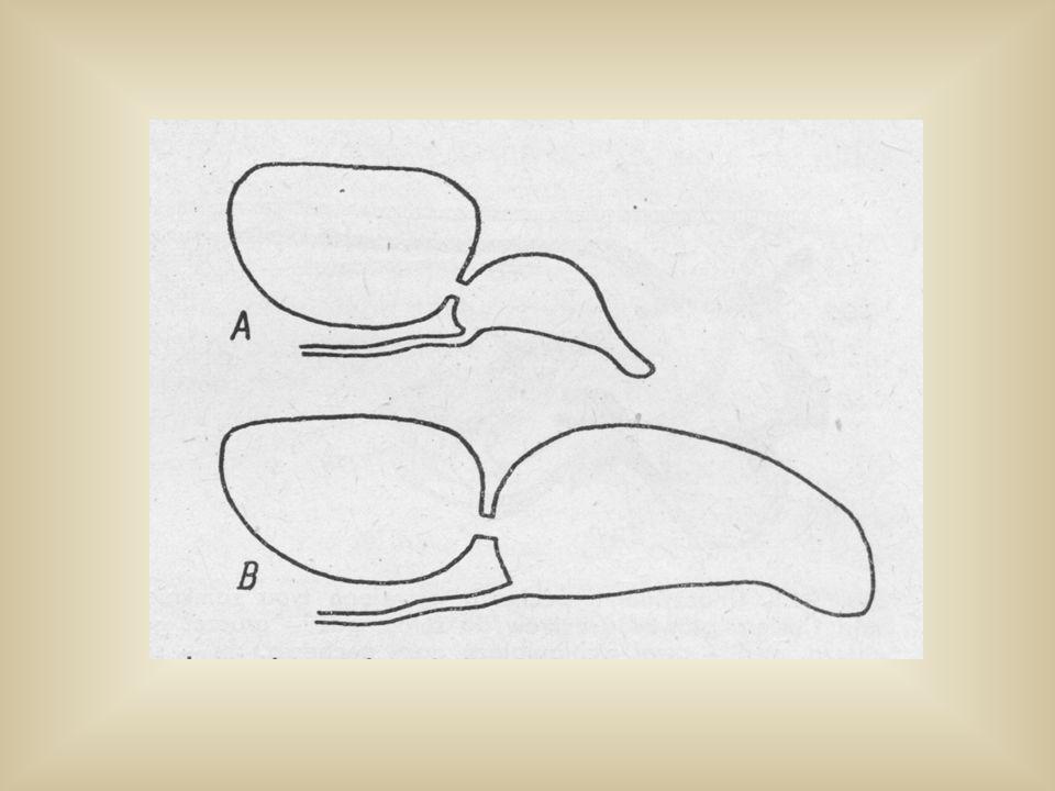 1-4 - trzony kręgów błs - błędnik skórzasty cc - kanał łączący en - mózg pł - komora przednia pp - komora tylna sca - czółenko sip - zatoka nieparzysta błędnika sus - kostka wieszakowa tri - kostka tródzielna