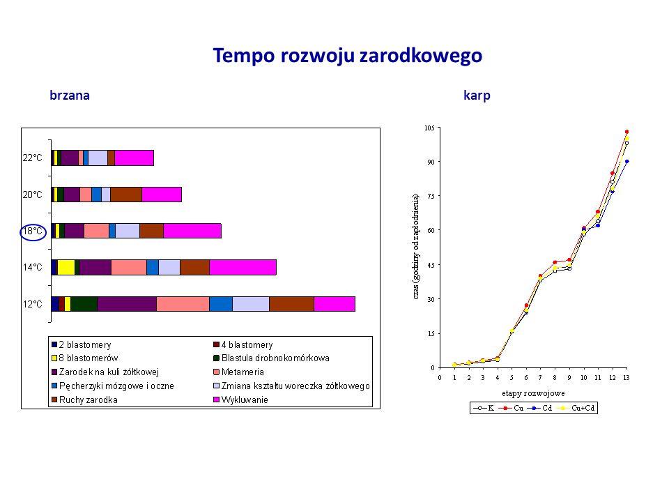 Tempo rozwoju zarodkowego brzanakarp