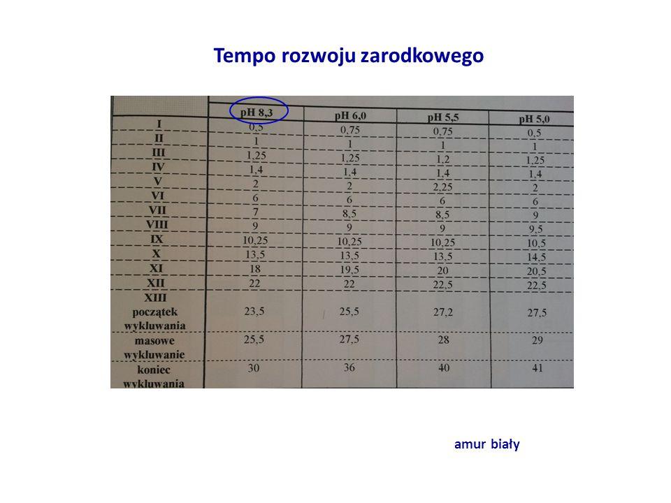 Tempo rozwoju zarodkowego amur biały