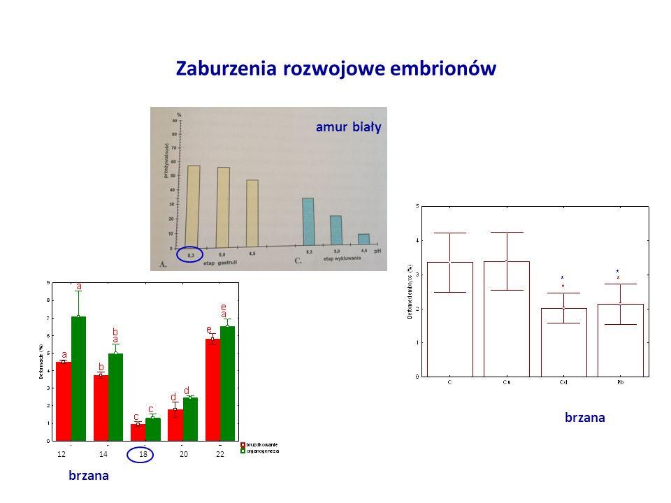 Zaburzenia rozwojowe embrionów brzana amur biały brzana 12 14 18 20 22