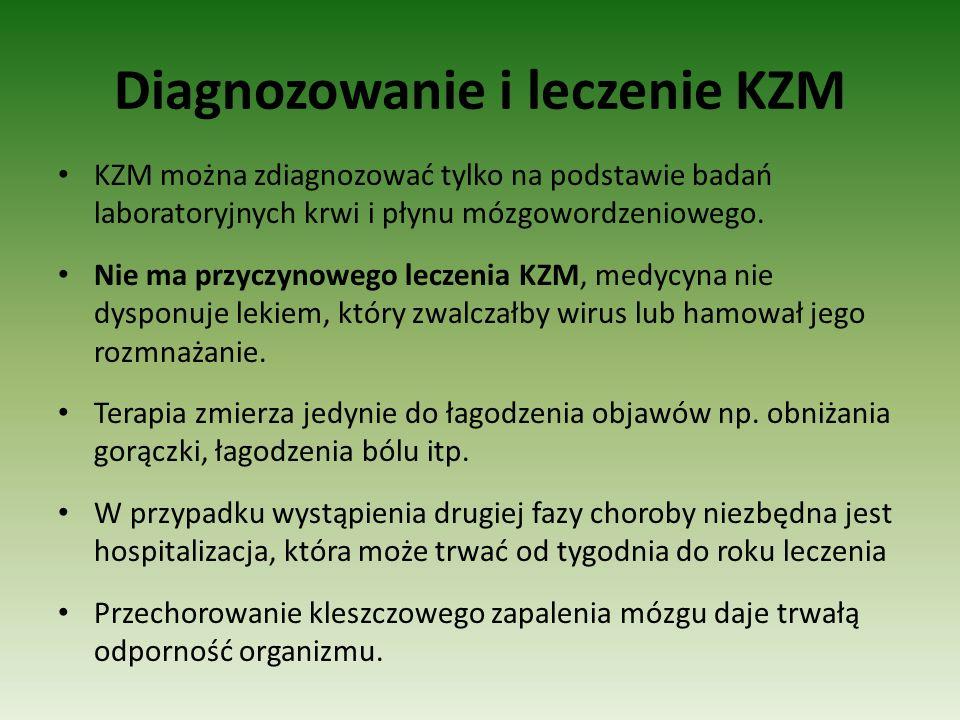 Diagnozowanie i leczenie KZM KZM można zdiagnozować tylko na podstawie badań laboratoryjnych krwi i płynu mózgowordzeniowego. Nie ma przyczynowego lec