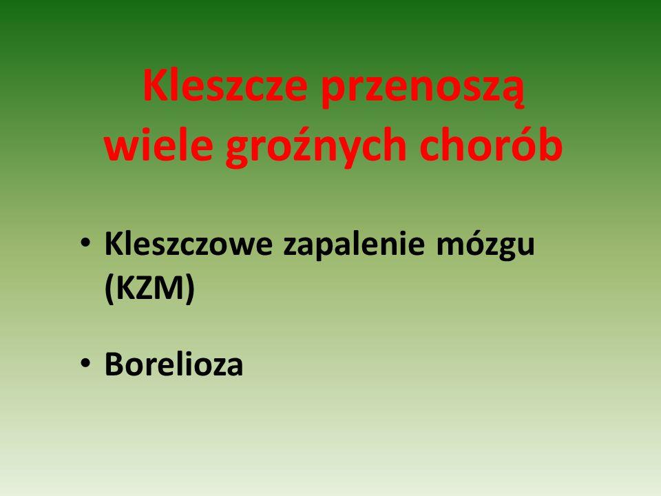 Kleszcze przenoszą wiele groźnych chorób Kleszczowe zapalenie mózgu (KZM) Borelioza