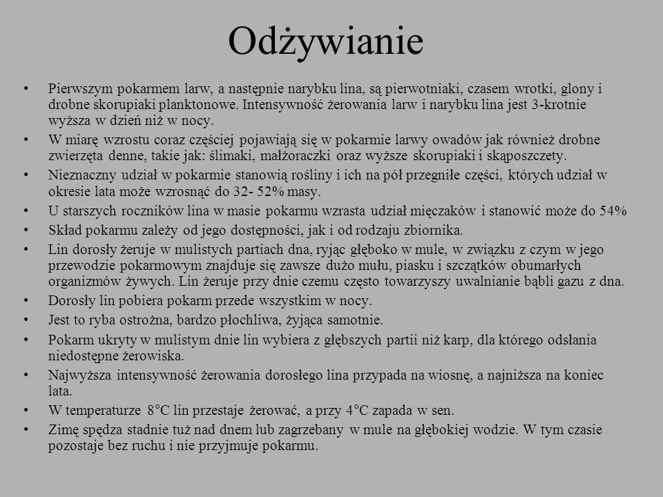 Ochrona Lin nie posiada okresu ochronnego W Polsce wymiar ochronny lina wynosi 25 cm Limit dobowy to 4 szt.