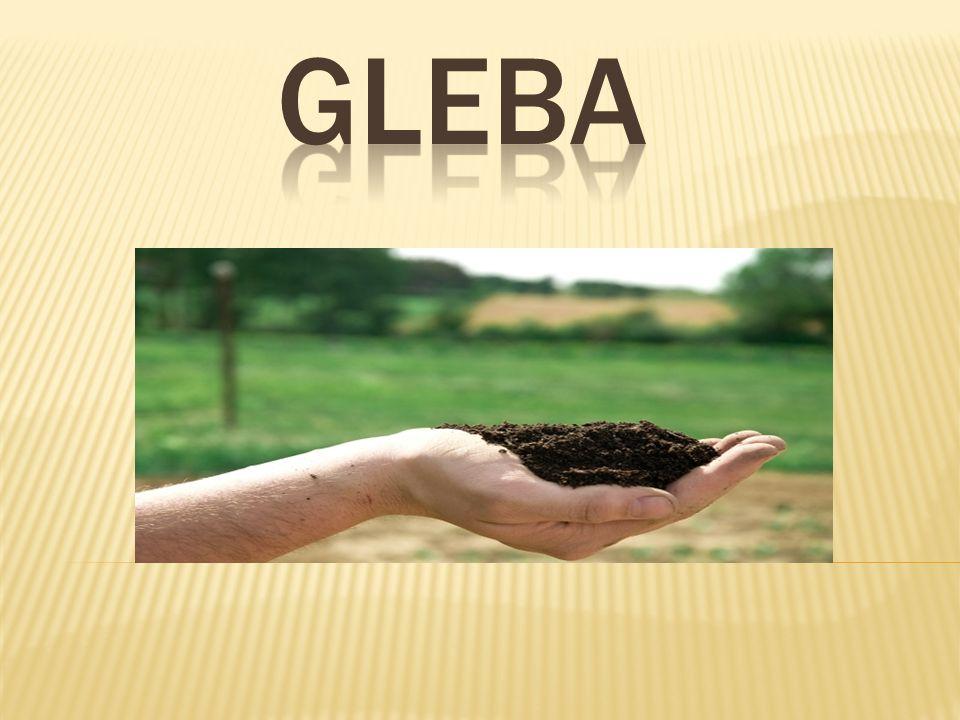 Na terenie gminy przeważają gleby brunatne wyługowane i bielicowe, określano jako kompleks żytni słaby i żytnio-łubinowy.