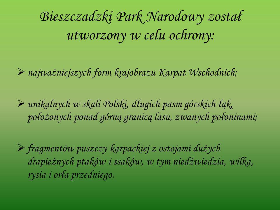 Bieszczadzki Park Narodowy został utworzony w celu ochrony: najważniejszych form krajobrazu Karpat Wschodnich; unikalnych w skali Polski, długich pasm