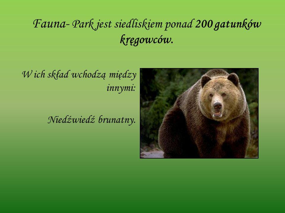 Fauna- Park jest siedliskiem ponad 200 gatunków kręgowców. W ich skład wchodzą między innymi: Niedźwiedź brunatny.