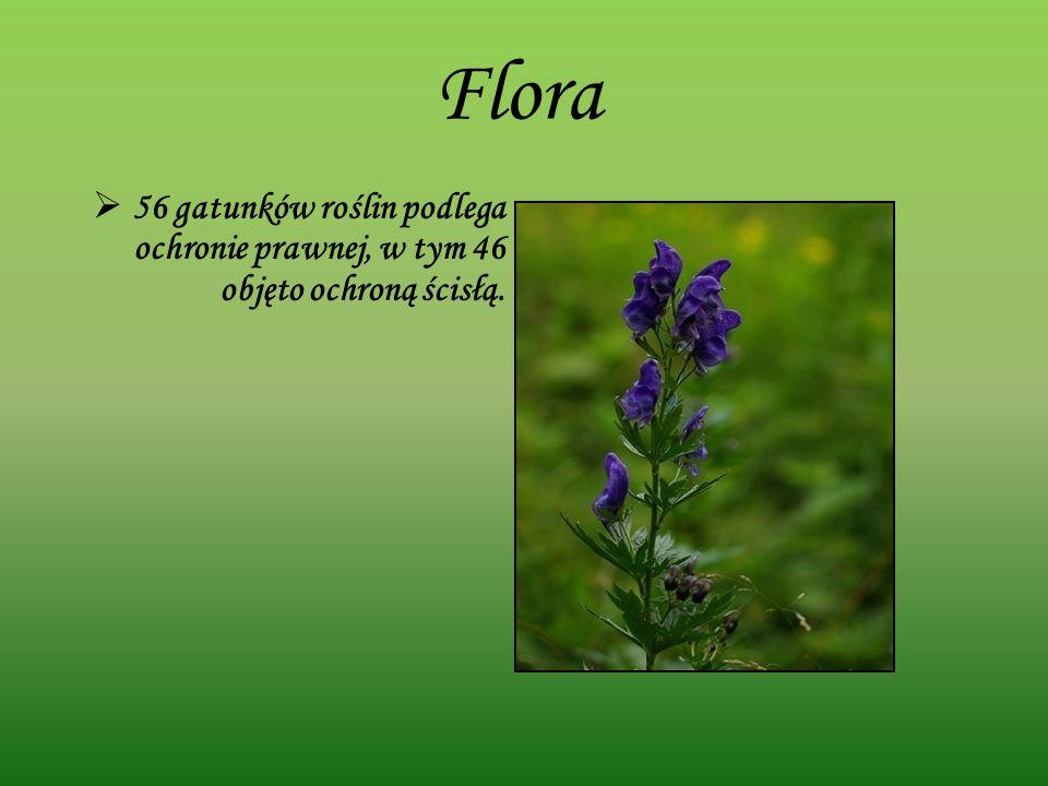 Flora 56 gatunków roślin podlega ochronie prawnej, w tym 46 objęto ochroną ścisłą.