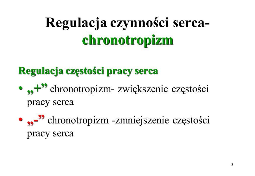 5 chronotropizm Regulacja czynności serca- chronotropizm Regulacja częstości pracy serca ++ chronotropizm- zwiększenie częstości pracy serca -- chrono