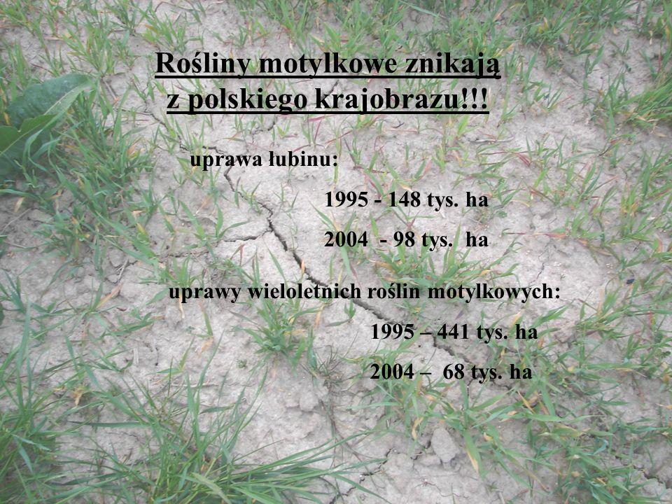 Rośliny motylkowe znikają z polskiego krajobrazu!!! uprawa łubinu: 1995 - 148 tys. ha 2004 - 98 tys. ha uprawy wieloletnich roślin motylkowych: 1995 –