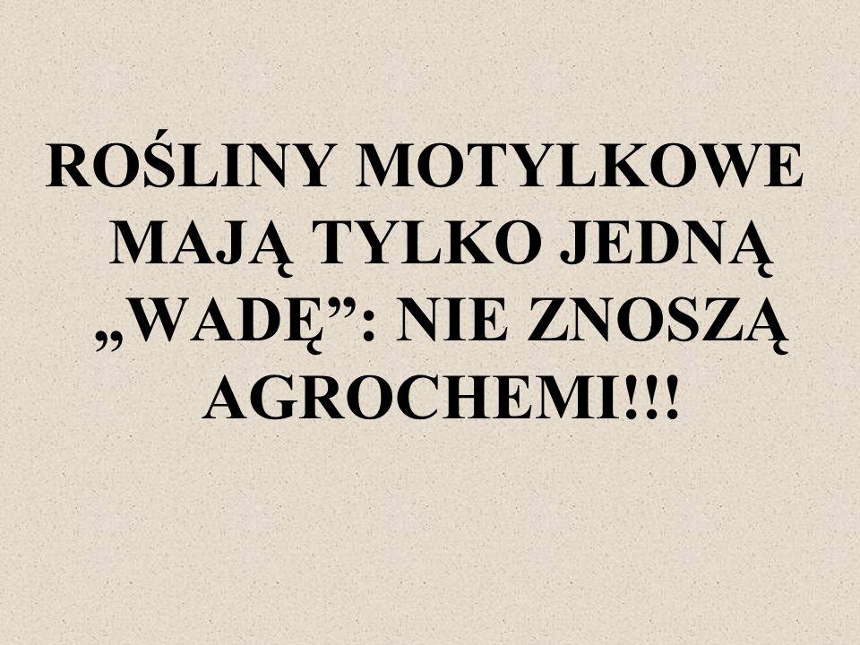 ROŚLINY MOTYLKOWE MAJĄ TYLKO JEDNĄ WADĘ: NIE ZNOSZĄ AGROCHEMI!!!