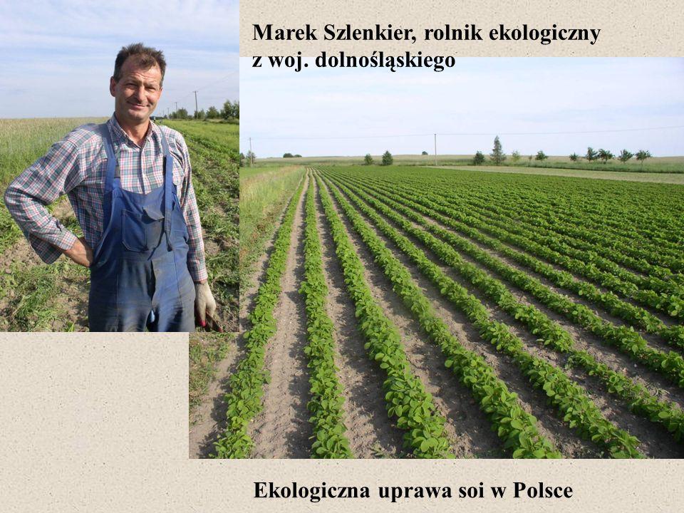 Marek Szlenkier, rolnik ekologiczny z woj. dolnośląskiego Ekologiczna uprawa soi w Polsce