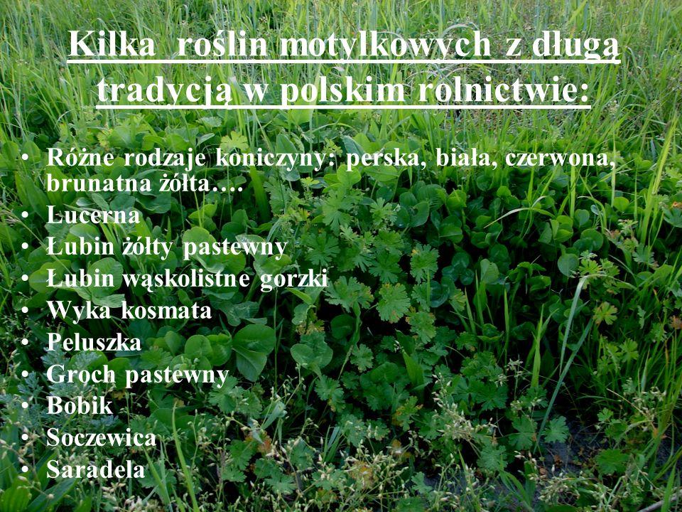 Kilka roślin motylkowych z długą tradycją w polskim rolnictwie: Różne rodzaje koniczyny: perska, biała, czerwona, brunatna żółta…. Lucerna Łubin żółty