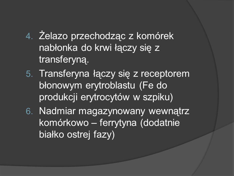 4. Żelazo przechodząc z komórek nabłonka do krwi łączy się z transferyną. 5. Transferyna łączy się z receptorem błonowym erytroblastu (Fe do produkcji