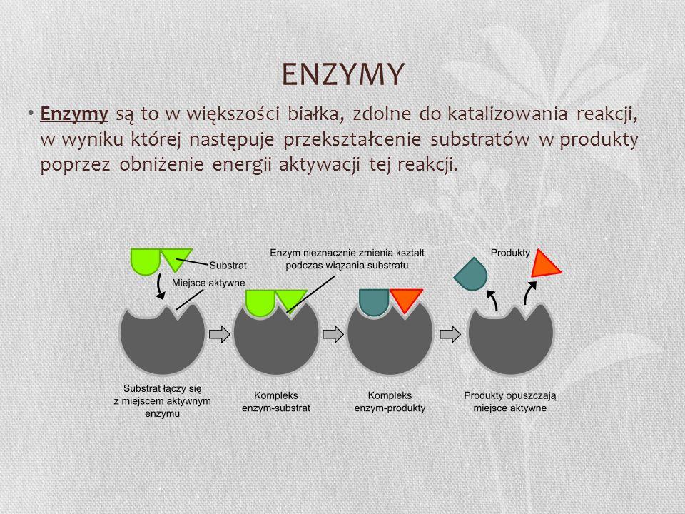 ENZYMY Enzymy są to w większości białka, zdolne do katalizowania reakcji, w wyniku której następuje przekształcenie substratów w produkty poprzez obni
