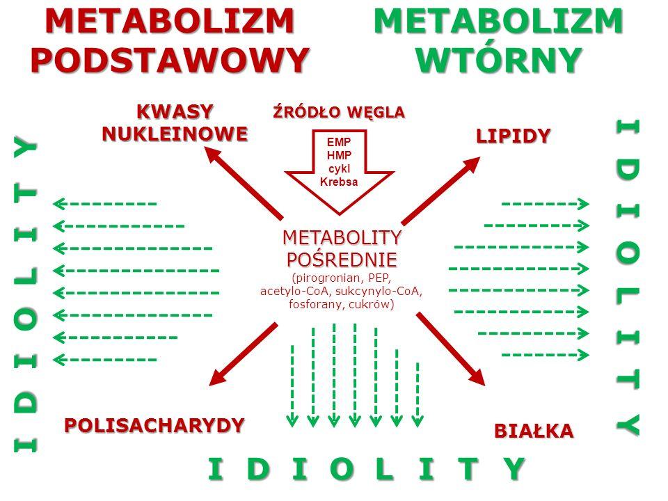 METABOLITY WTÓRNE (IDIOLITY) Nie pełnią podstawowych funkcji biologicznych Powstają w metabolizmie ograniczonej liczby gatunków, a nawet szczepów Ich biosynteza ściśle zależy od warunków hodowli Są zazwyczaj syntetyzowane jako grupy podobnych struktur chemicznych