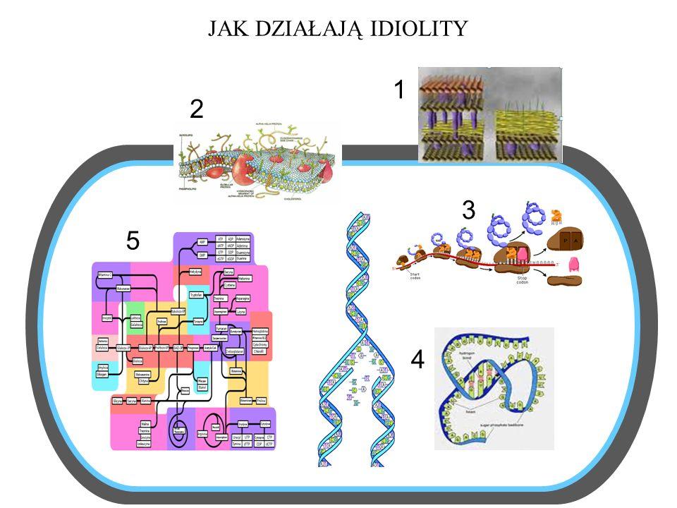 Do czego przydać się mogą geny odporności Markery genetyczne ARM – antibiotic resistant markers 1.