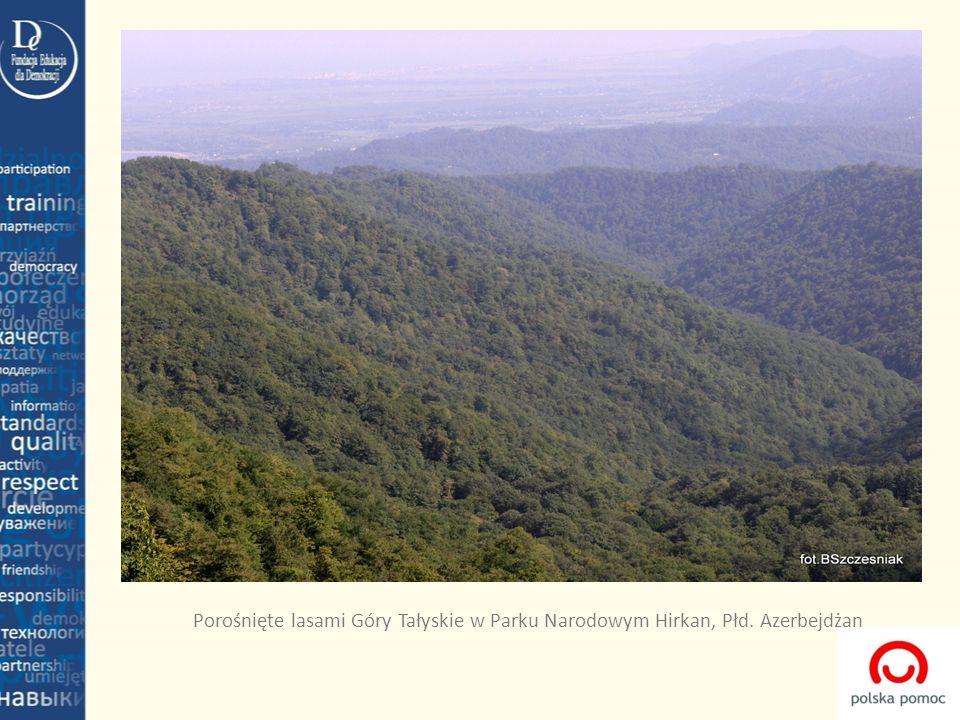 Porośnięte lasami Góry Tałyskie w Parku Narodowym Hirkan, Płd. Azerbejdżan
