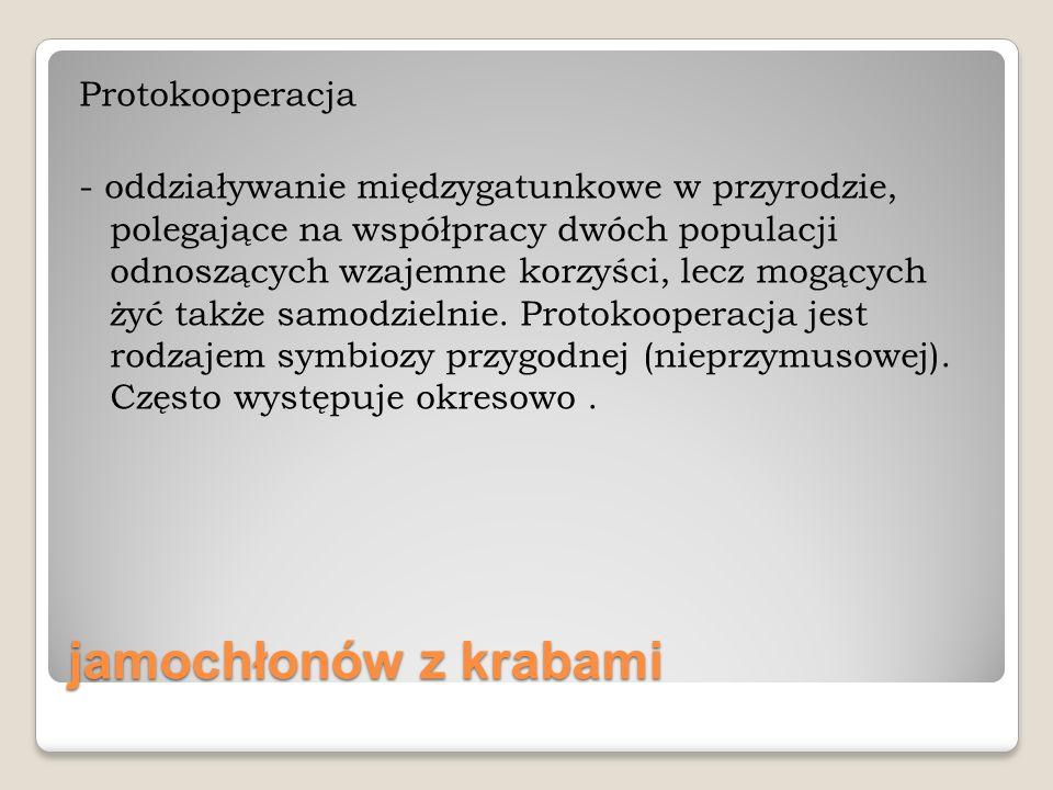jamochłonów z krabami Protokooperacja - oddziaływanie międzygatunkowe w przyrodzie, polegające na współpracy dwóch populacji odnoszących wzajemne korz