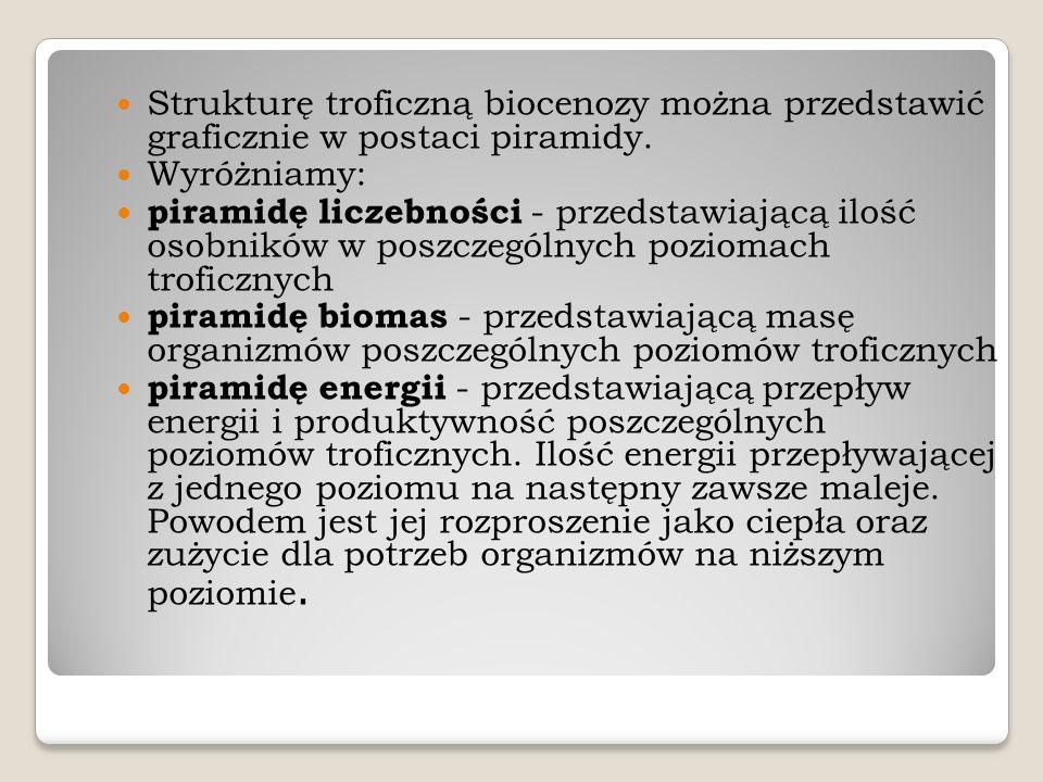 Strukturę troficzną biocenozy można przedstawić graficznie w postaci piramidy. Wyróżniamy: piramidę liczebności - przedstawiającą ilość osobników w po